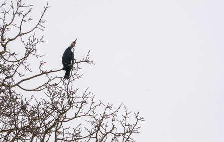 cormorant Stock Photo - 18591488