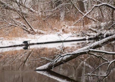 loner: heron Stock Photo