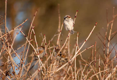 twing: Sparrow