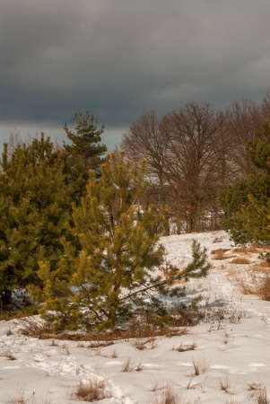 regeneration: rigenerazione naturale di alberi