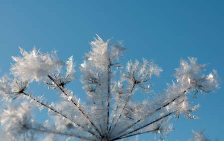 crystallization: Frost Stock Photo