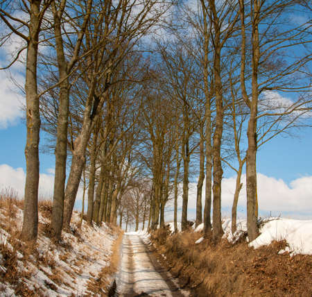 winter road Stock Photo - 18735029