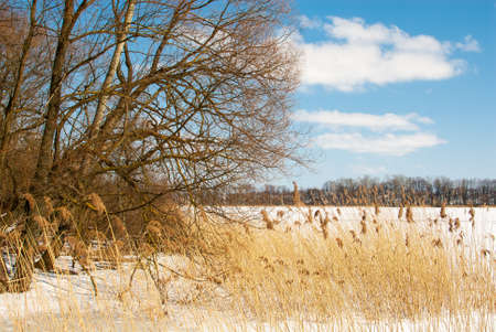winter lake photo