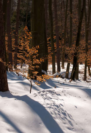 winter forest Stock Photo - 18735050