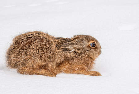 Hare Stock Photo - 18862730