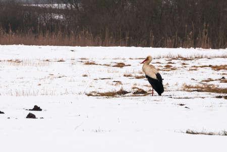 Stork Stock Photo - 18931902