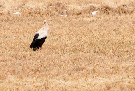 Stork Stock Photo - 18930407