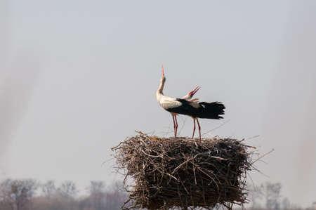 Stork Stock Photo - 19134621
