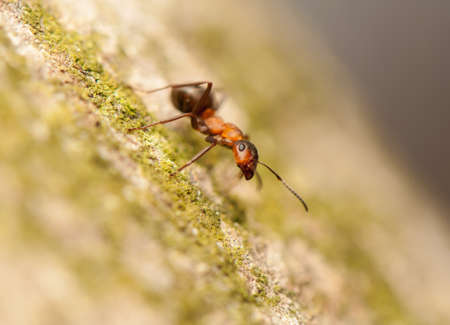 Ant Stock Photo - 19185873