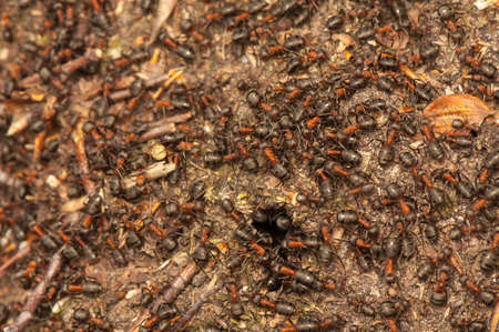 Anthill Stock Photo - 19186029