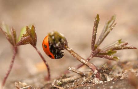 Ladybug Stock Photo - 19184833