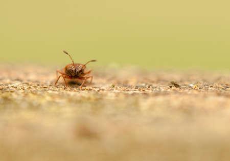 interesing: Small beetle