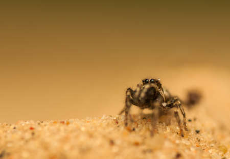 Jumping spider Stock Photo - 19567126