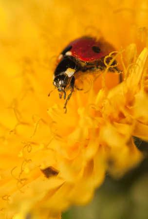 Ladybug Stock Photo - 19825827
