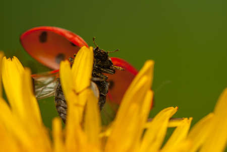 Ladybug Stock Photo - 19825816