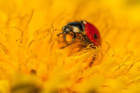Ladybug Stock Photo - 19825810