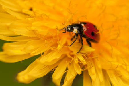 Ladybug Stock Photo - 19825841