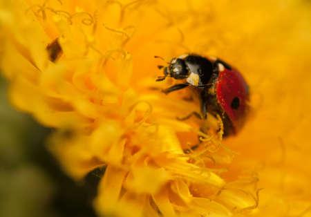 Ladybug Stock Photo - 19825839