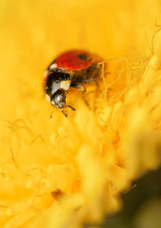 Ladybug Stock Photo - 19825805