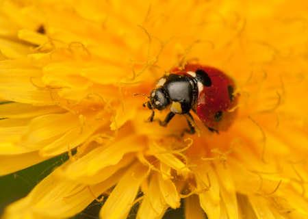 Ladybug Stock Photo - 19825814