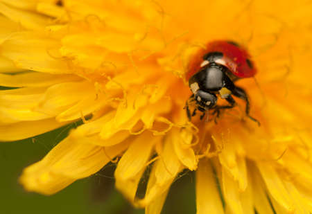 Ladybug Stock Photo - 19825837