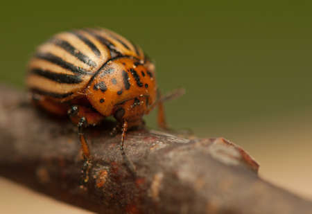 Rootworm photo