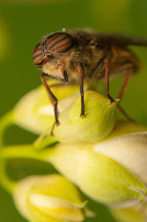 Fly Stock Photo - 20405153