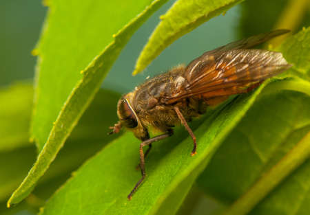 Fly Stock Photo - 20404976