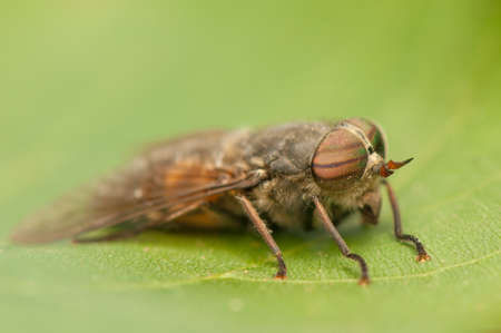 Fly Stock Photo - 20405300