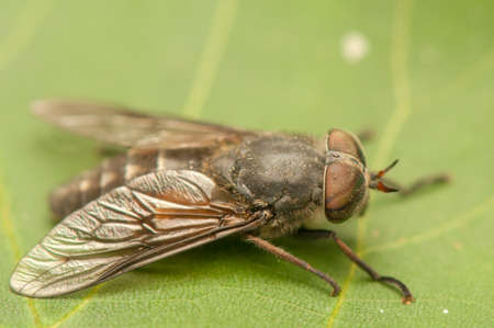 Fly Stock Photo - 20405376