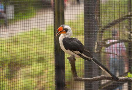 Exotic bird Stock Photo - 20999857