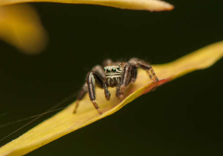 Jumping spider Stock Photo - 21870759