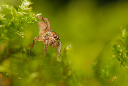 Jumping spider Stock Photo - 22343771