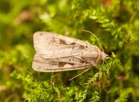 Moth Stock Photo - 22343774