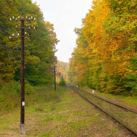 unevenly: Railroad track and Autumn forest