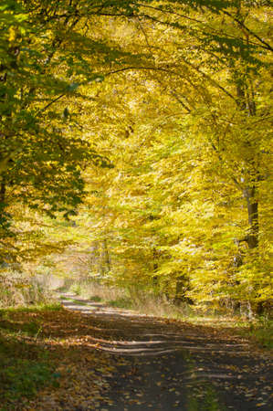 unevenly: Autumn forest and road