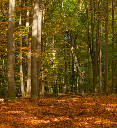 multi story: Autumn forest Stock Photo