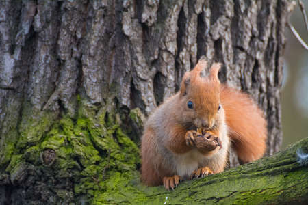 brusch: squirrel Stock Photo