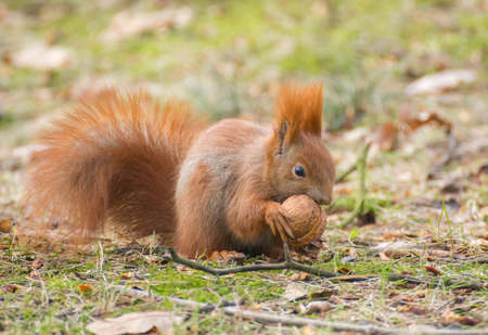 brusch: squirrel Stock Photo