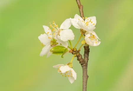 perianth: Spring flower