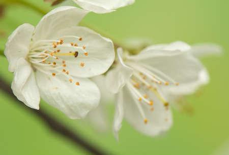 blumen: Spring flower