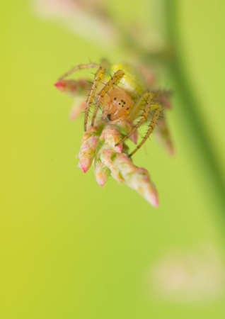 macrophotography: Spider