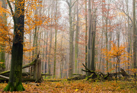 Autumn forest photo