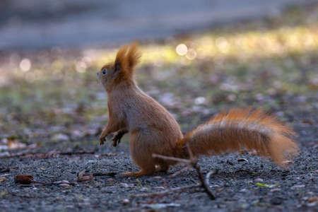 brusch: Squirrel jumping