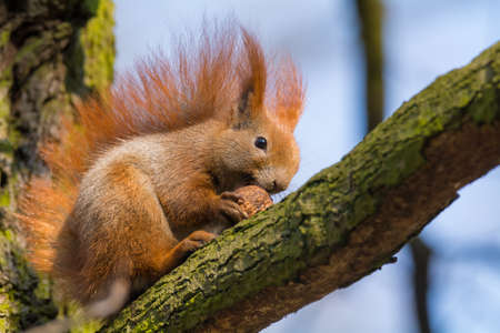 brusch: Squirrel climbing a tree