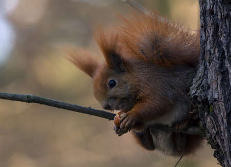 brusch: Squirrel climbing tree