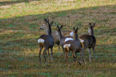 difficult lives: Group of deer in nature