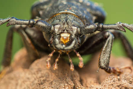 pronotum: beetle Stock Photo