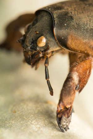 mole: mole cricket
