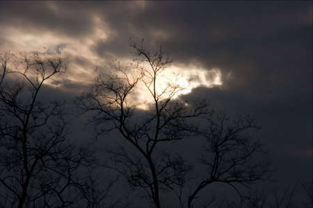 ouettes of trees under dark, stormy sky Stock Photo - 616482